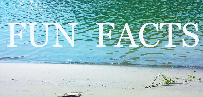 Fun Facts – Ein bisschen über mich!
