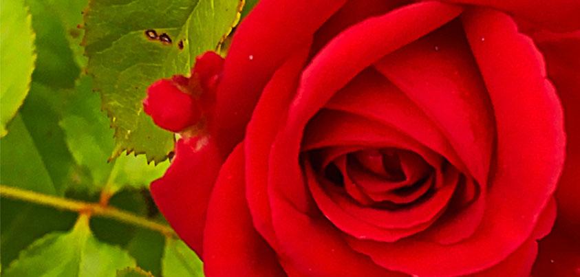 10 Möglichkeiten als Single den Valentinstag zu verbringen
