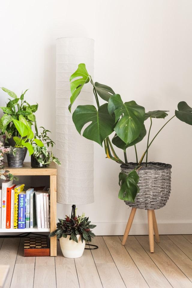 Zimmerpflanzen als Home Decor und Luftreiniger