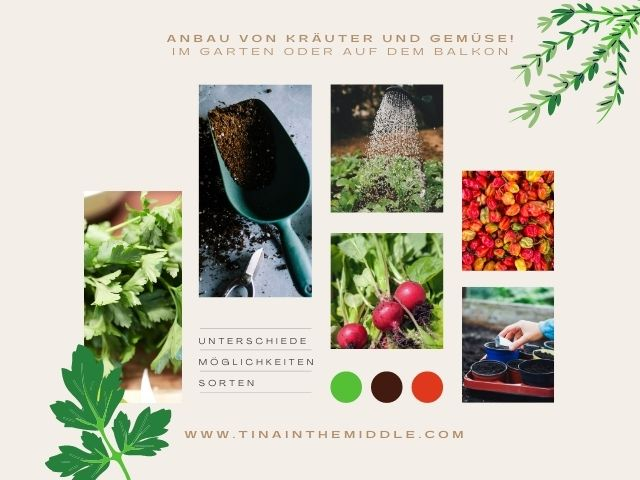 Anbau von Gemüse und Kräuter! Im Garten oder auf dem Balkon
